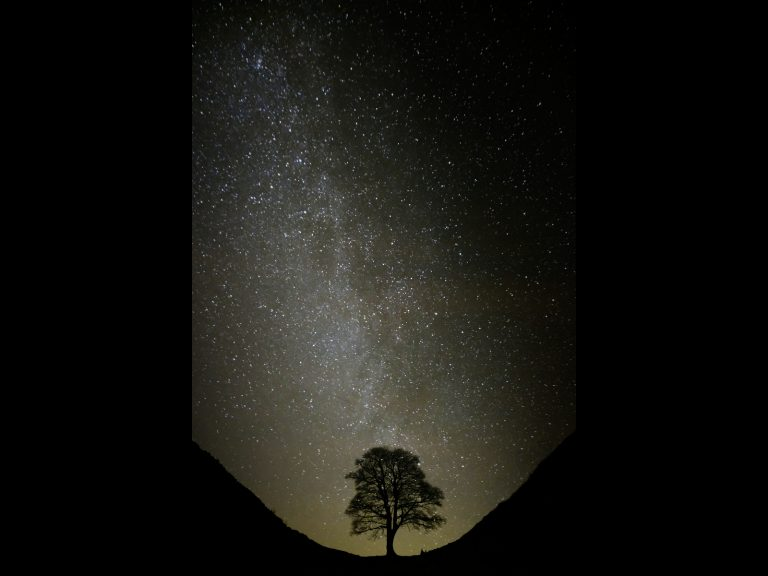 PDI Commended_Sycamore Silhouette by Peter King