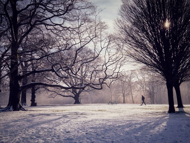 PDI Very Highly Commended_A Walk in the Park by Peter King