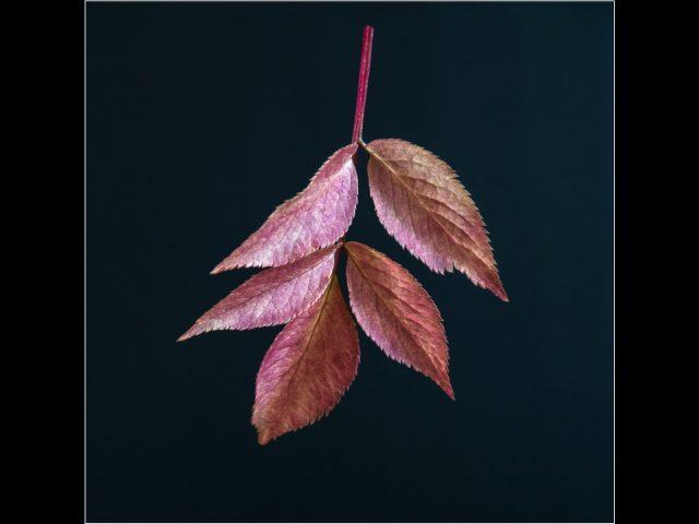 1018 Autumn Leaves
