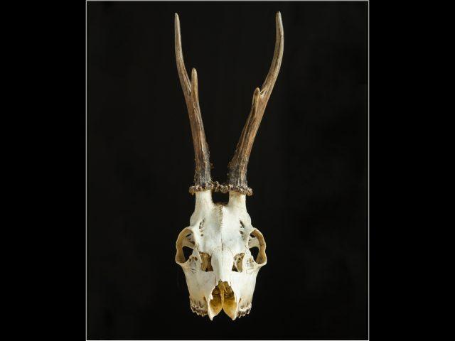 1055 The Skull