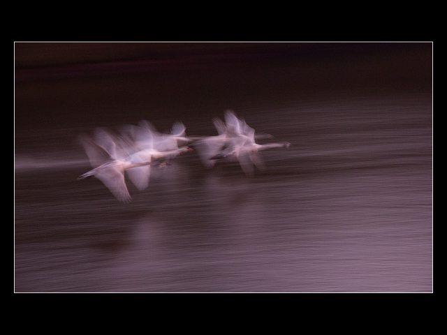 Paul Moran_Dawn flight