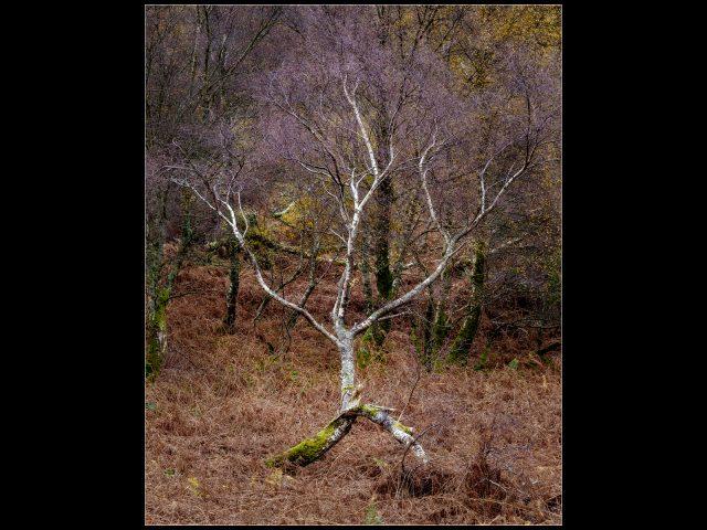 Theme 3rd Place_Robert Hume_Runaway Tree