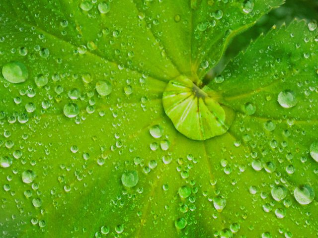 2252_Ruth Hill_2030 Raindrops