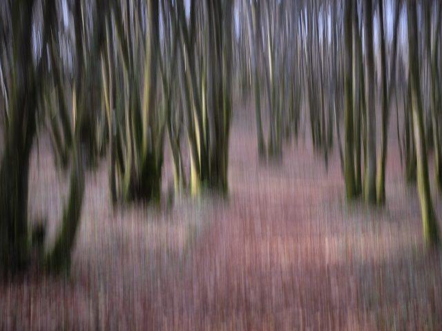Peter King_Autumn Woodland