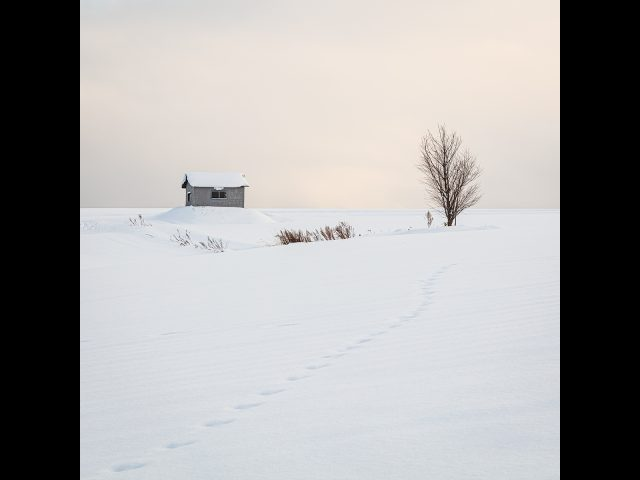 Print, Best Colour Image & Best Landscape Winner _Hut and Tree by David Robinson