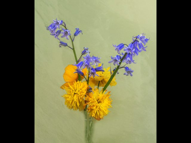 Theme Flowers 1st place_fred parkinson_yellow+and+blue